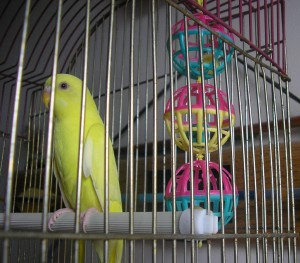 How to keep your bird happy and entertained!